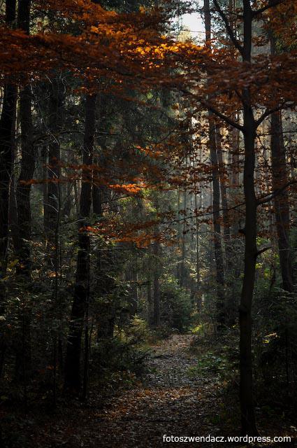 Rezerwat Sufraganiec jesienią