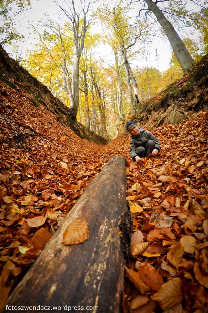Rezerwat przyrody Barania Góra (województwo świętokrzyskie)